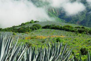 No solo Oaxaca hace buen mezcal.