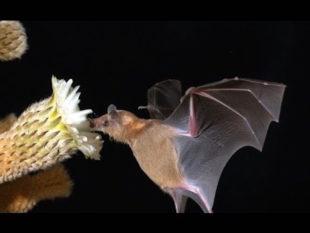 Los murciélagos de tu mezcal
